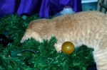 Cheshire Kitten puts away Christmas decorations.