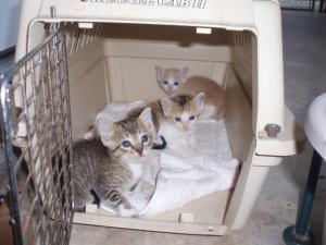 Three cute kittens arrived by morning.