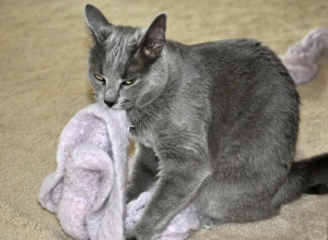 Karma loves her scarf