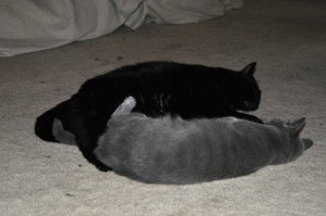 Becket and Karma cuddling