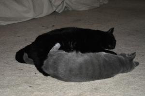 Becket and Karma cuddling