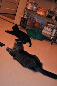 Reggie and Petunia in the kitchen
