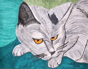 Gray Cat. Found.