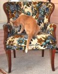 Sniffing chair